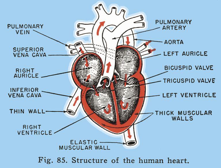 Classificazione OMS di ipertensione polmonare